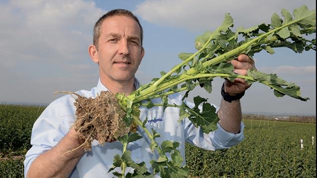 Syngenta's Simon Roberts shows a split stem in an oilseed rape plant.
