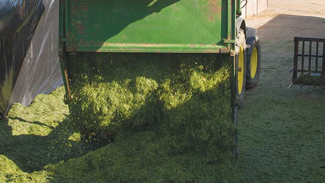 Washing tyres before they enter the clamp can help reduce soil contamination in silage. © Tim Scrivener