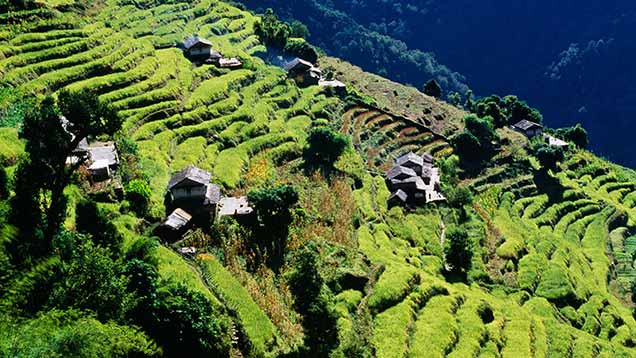 Terraces in Nepal before the earthquake ©Rex
