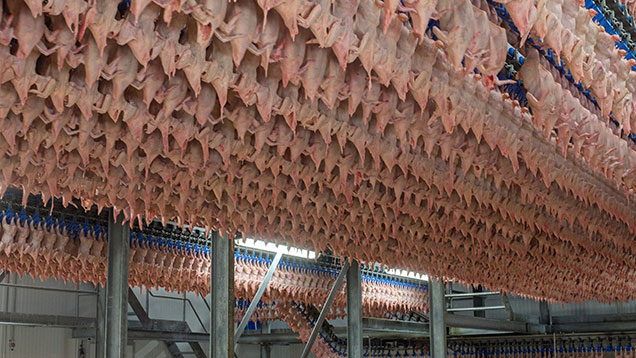 Cargill Meats Europe's air-chilling facility © Godfrey Pitt