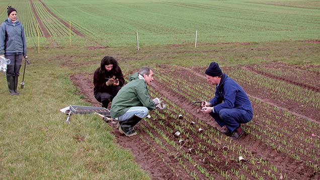 Blair McKenzie (right) and his team sample soil to assess root development.