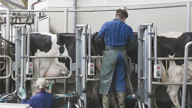 Milking-Blend-Images-Rex-Shutterstock