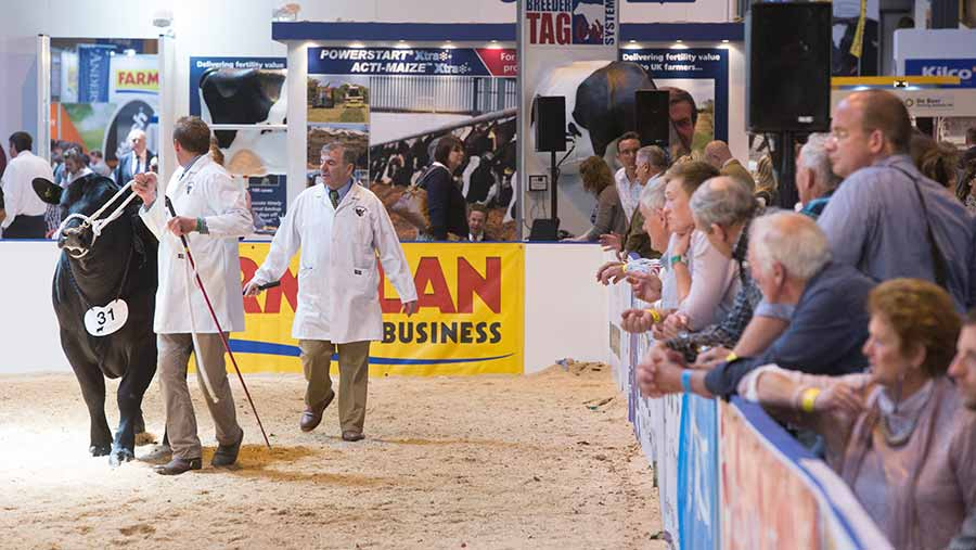 Show ring at the 2015 Livestock Event © Tim Scrivener