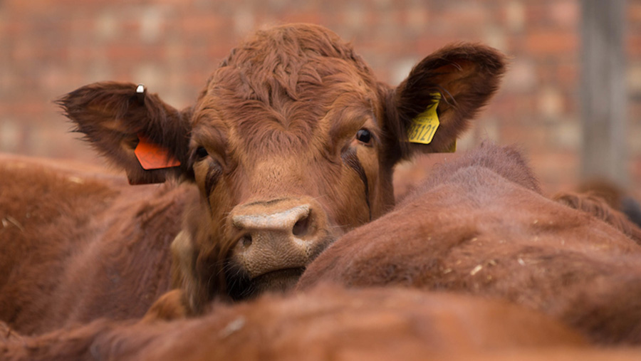 Failure to meet TB inspection schedules could lead to compliance penalties © Tim Scrivener
