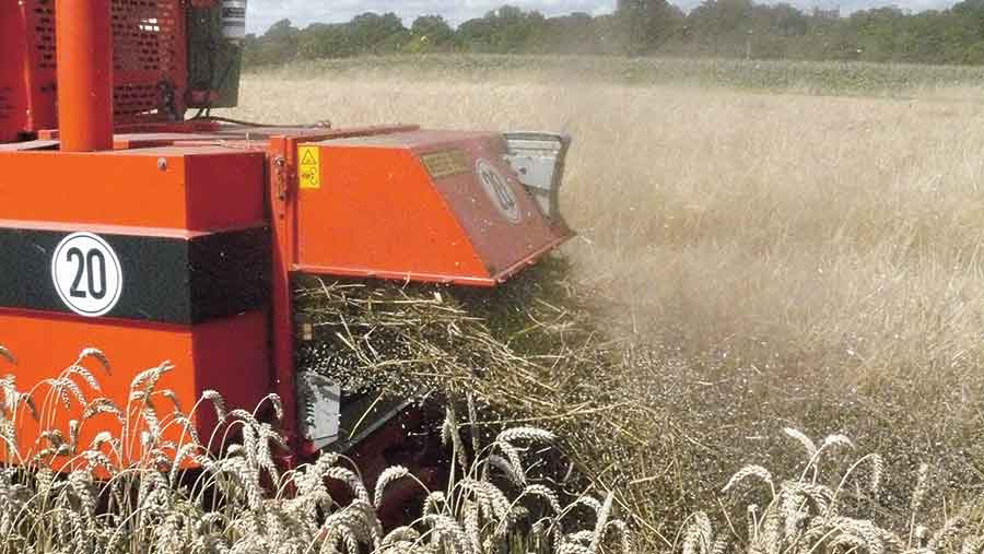 Bunt spores at harvest © Bayer