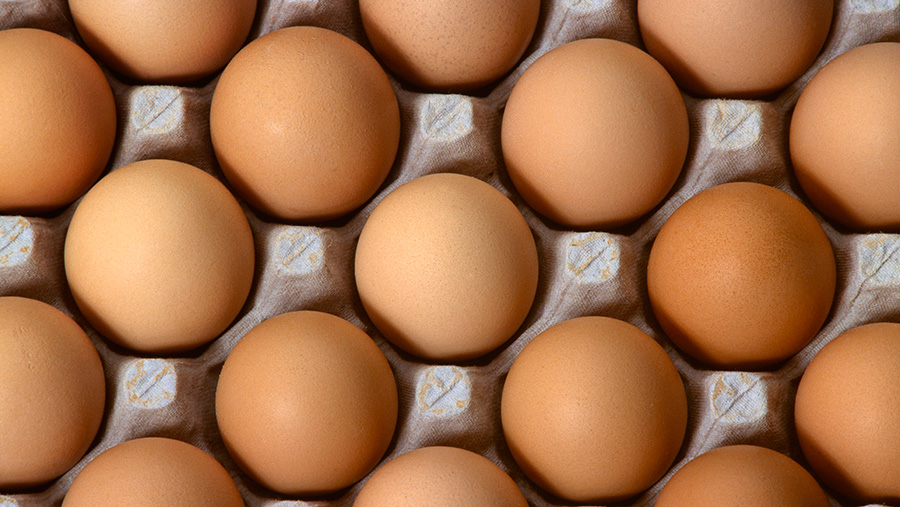 Eggs-c-Design-Pics-Inc-REX-Shutterstock-rexfeatures_5321159a