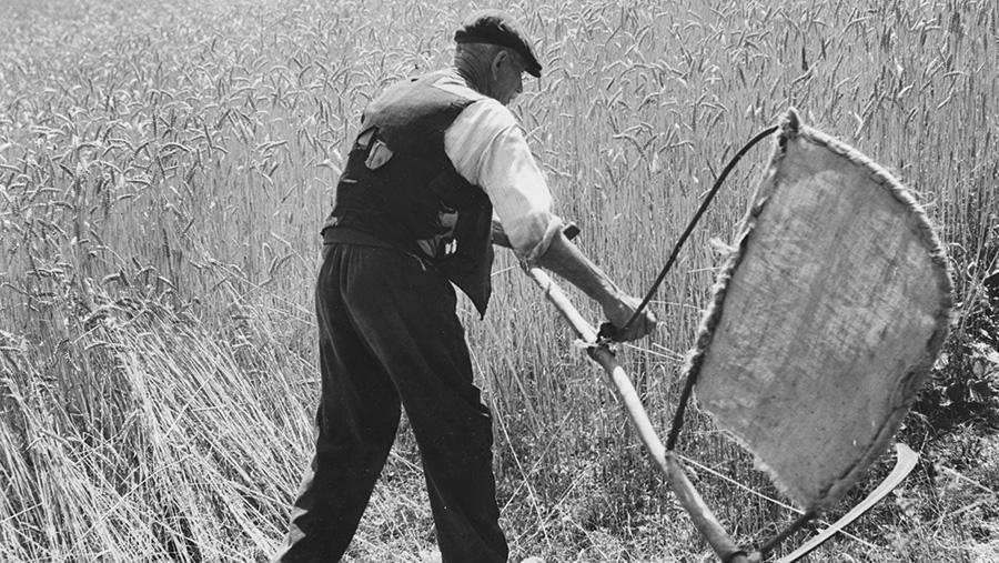 Harvesting crops using a scythe