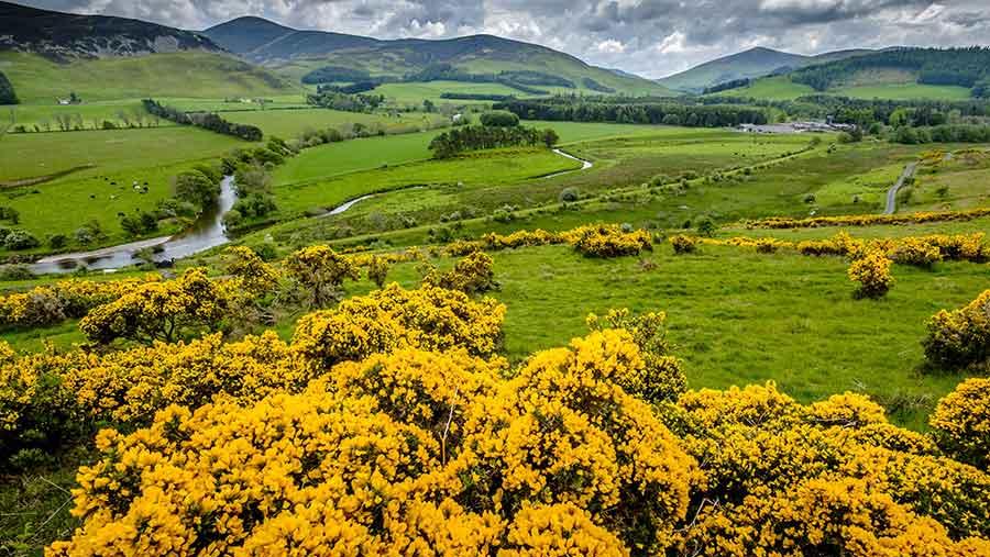 © Andrew Wilson / Scottish Viewpoint/REX/Shutterstock