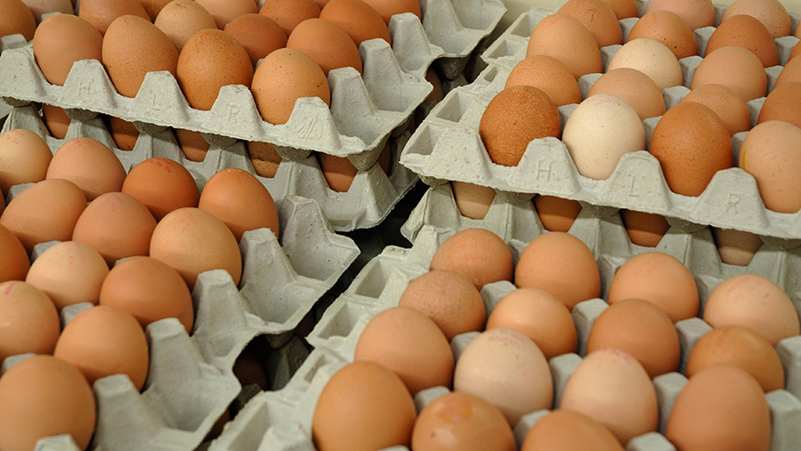 Vegetable-protein sales could hurt eggs, conference hears - Farmers Weekly