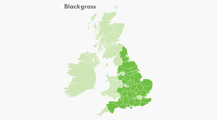 Blackgrass map