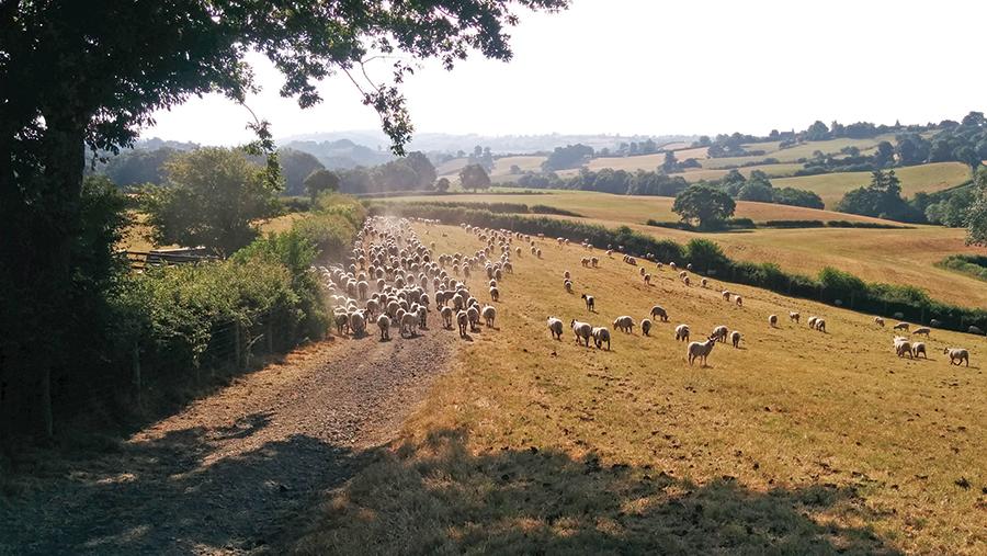 Scorched fields on John Yeomans' farm near the Welsh border