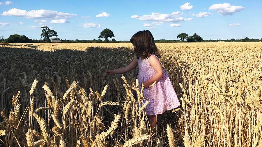 Will Sargent's daughter checking wheat
