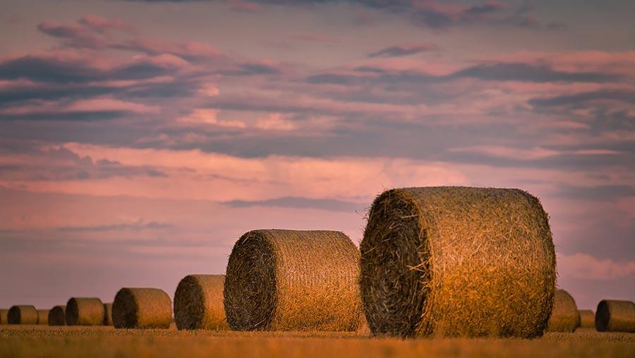 Harvest photo