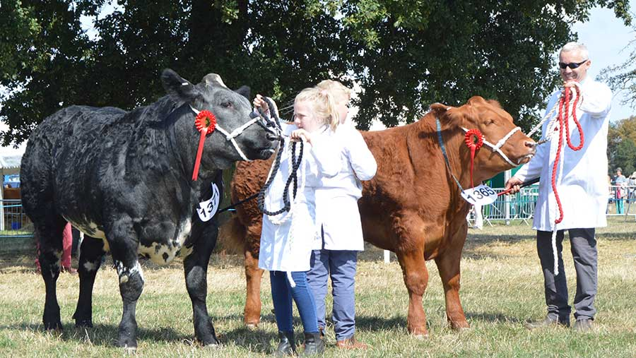 Young handlers at the Bucks Show © Hayley Parrott