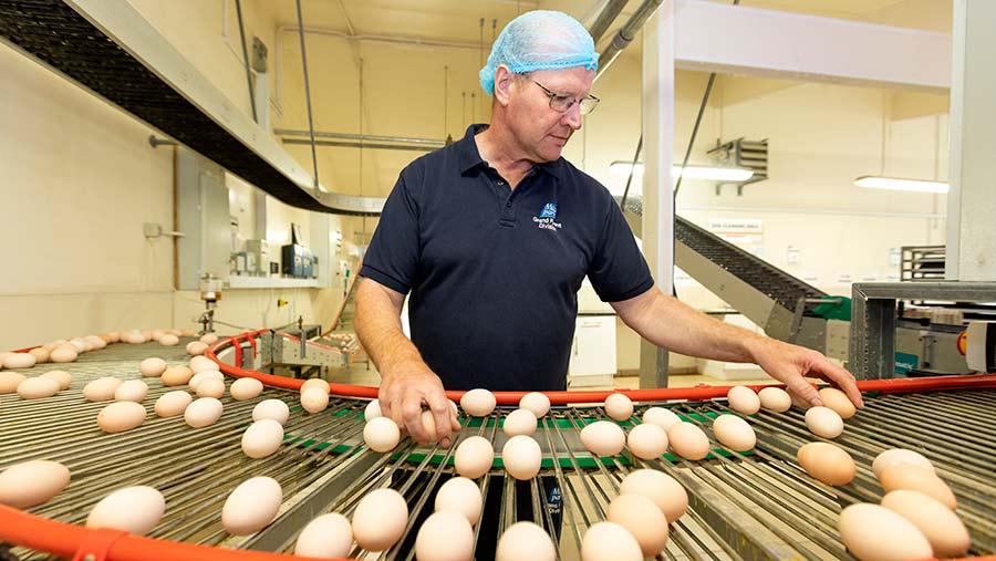 Derek McKeown processing eggs