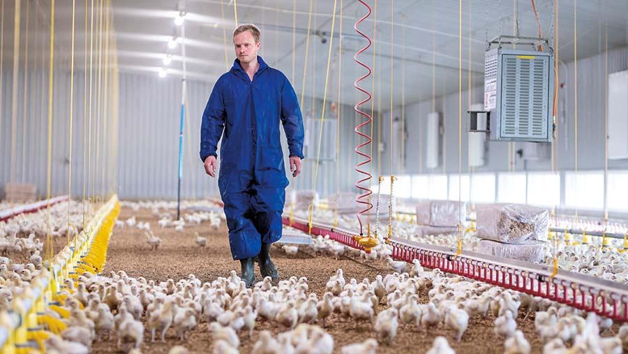 Glen Powell walking in the chicken shed