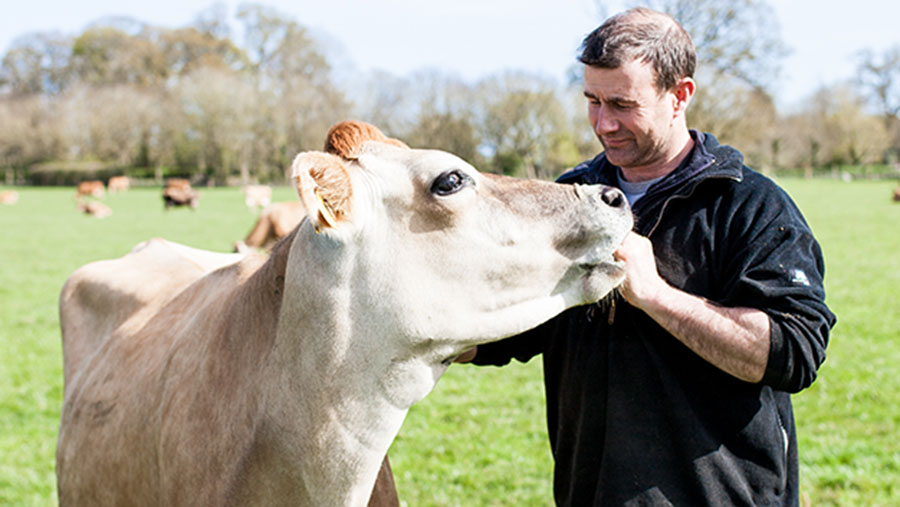 Jon Perkin with Jersey cow