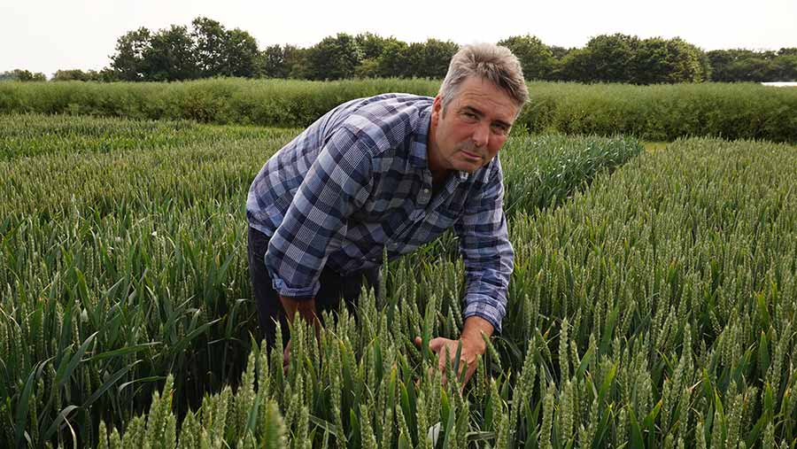 Ron Granger in a field of wheat