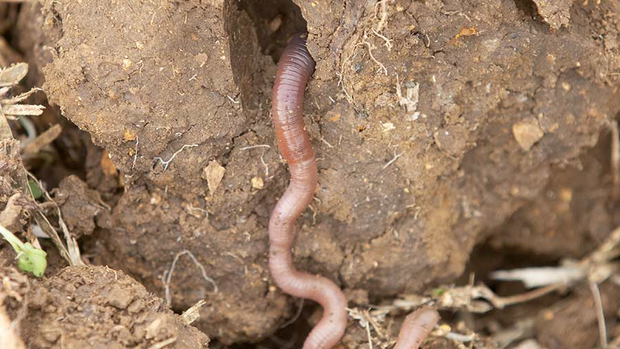 Soil with worms