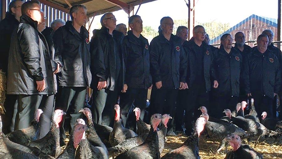 Choir singing to bronze turkeys © Rhug Estate