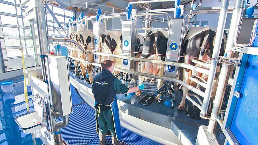 A herdsman with cows in a milking parlour