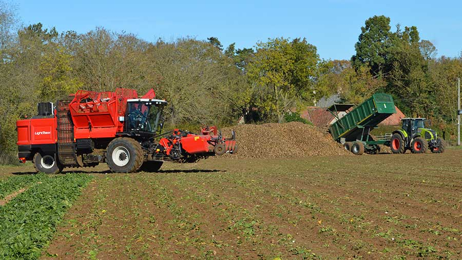 Harvesting beet on the Blankney estate in Lincolnshire