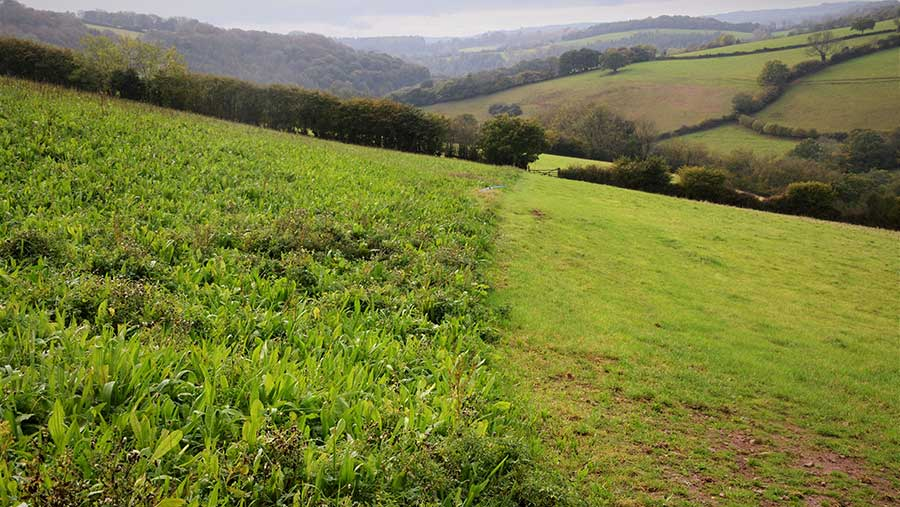 Herbal ley next to unimproved pasture