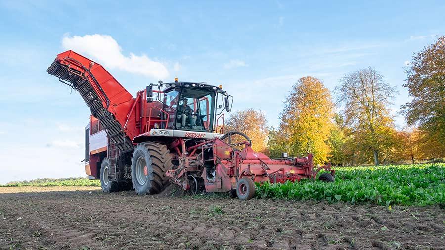 Sugar beet harvester leaving tyre tracks on bare soil
