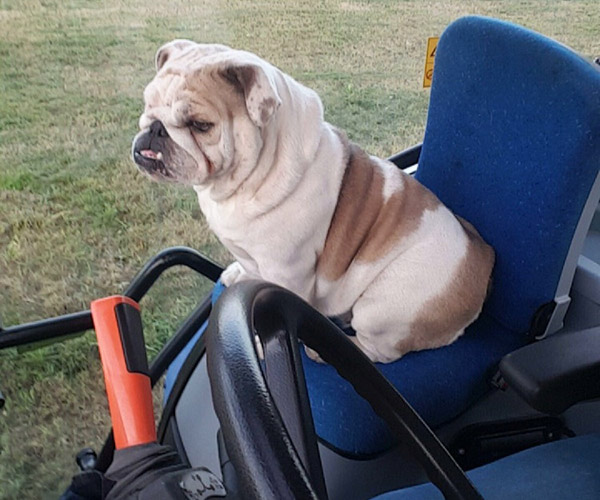 Dog in tractor by Georgina Duckitt