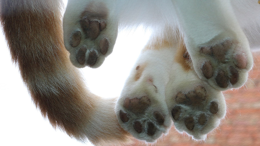 Cat paws from under glass table by Elizabeth Cliff