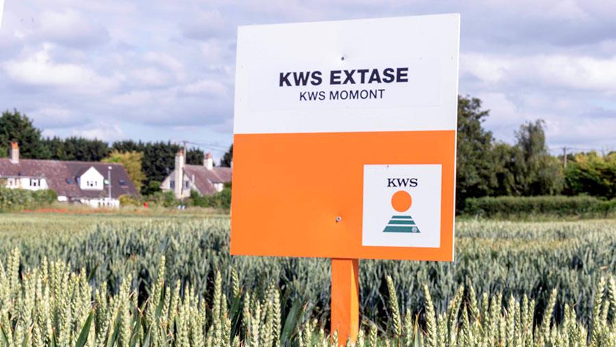A crop plot of Extase winter wheat