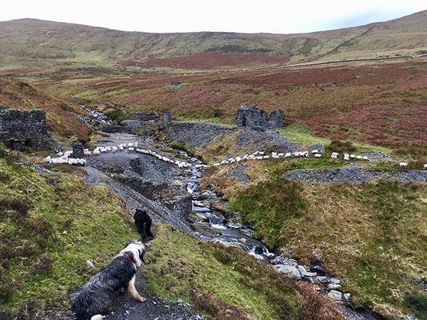 Anna Kerruish dog landscape