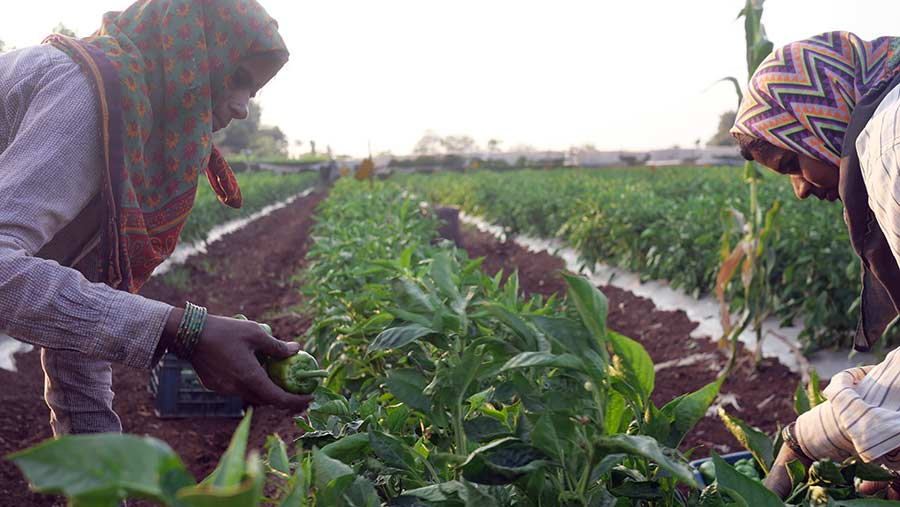 Women in Indian agriculture face long working hours