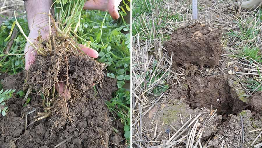 Left, good soil structure under cover crop. Right, poor soil structure after stubble
