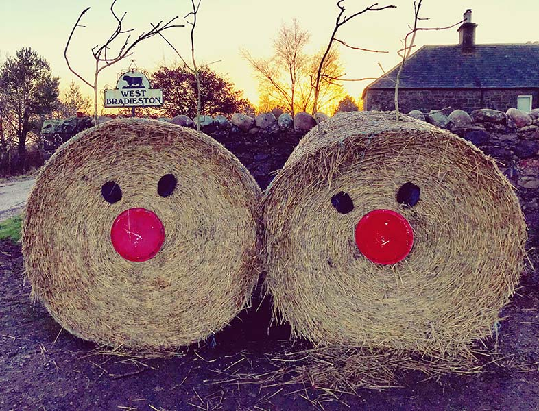Xmas decorated bales