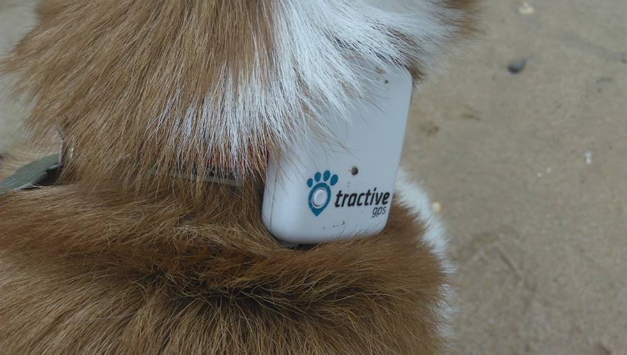 dog tracker collar