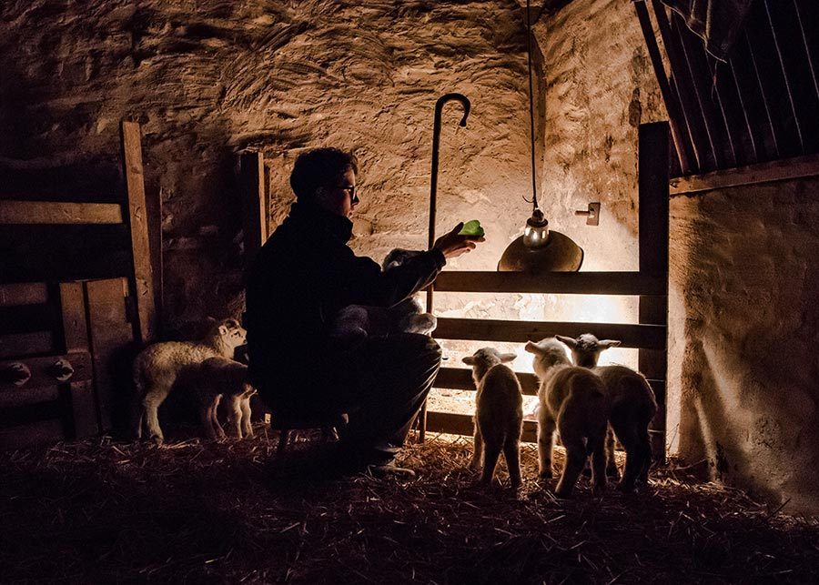Shepherd in hut with sheep in front of fire