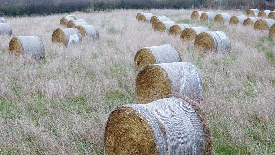 Rows of round bales in a field