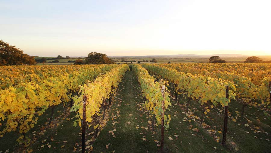 A view across a Sussex vineyard sold by BTF Partnership last year © BTF Partnership