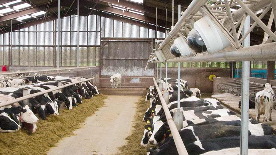 A cow shed with dome cameras mounted above the pens