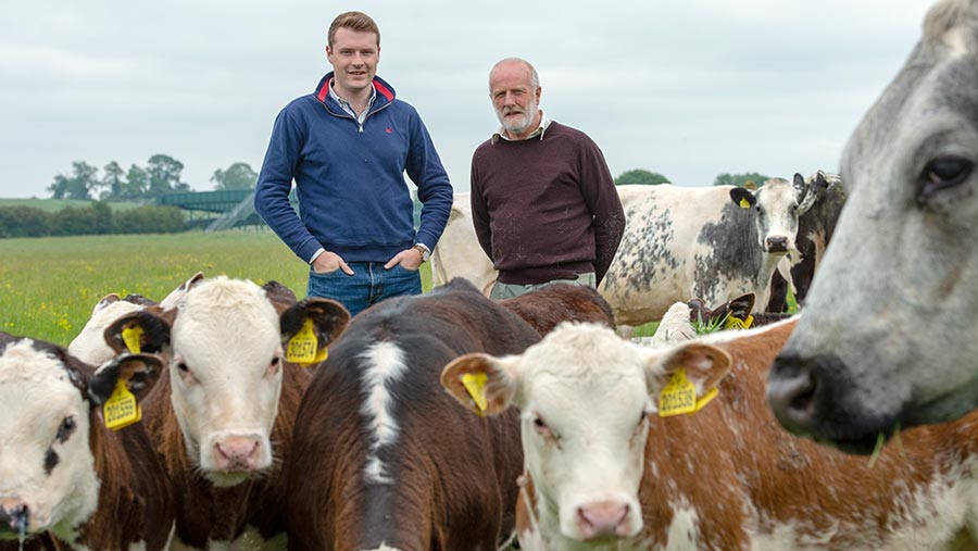 Matt Rollason and Mark Spendlove with Hereford cows