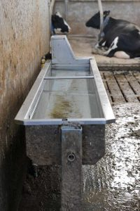 Tipping water trough