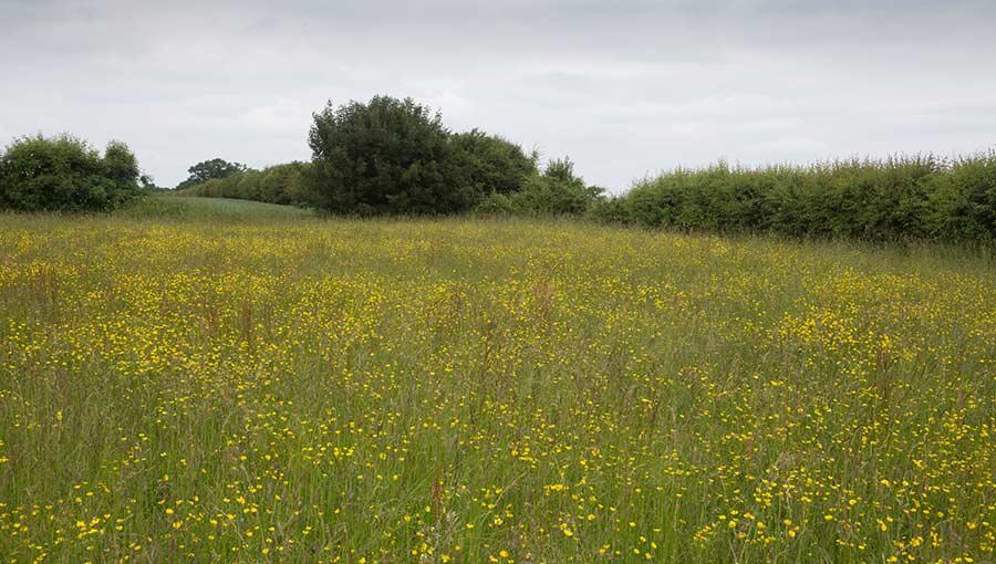 Wildflower meadow © Tim Scrivener