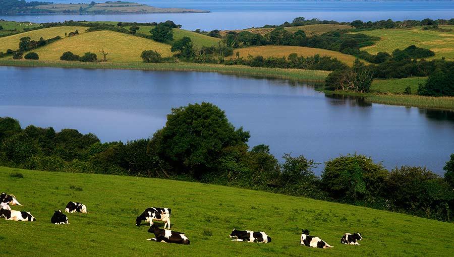 Irish dairy farm © Design Pics Inc/REX/Shutterstock