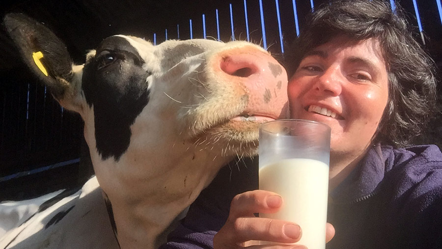 Abi Reader with cow
