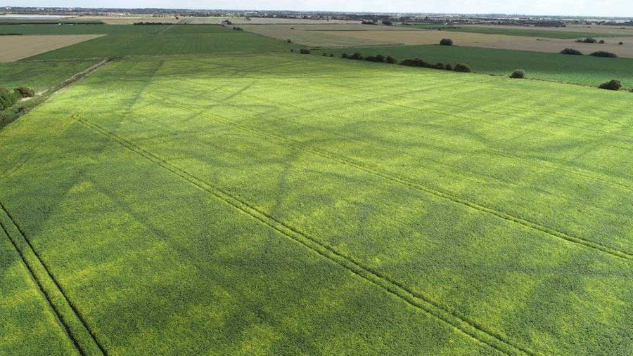 Aerial view of soya field