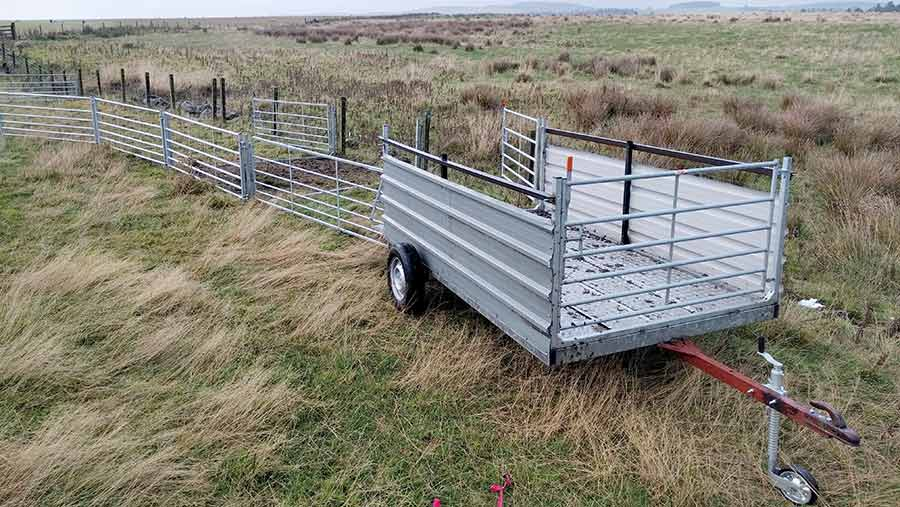 Kenny Fraser sheep handling trailer