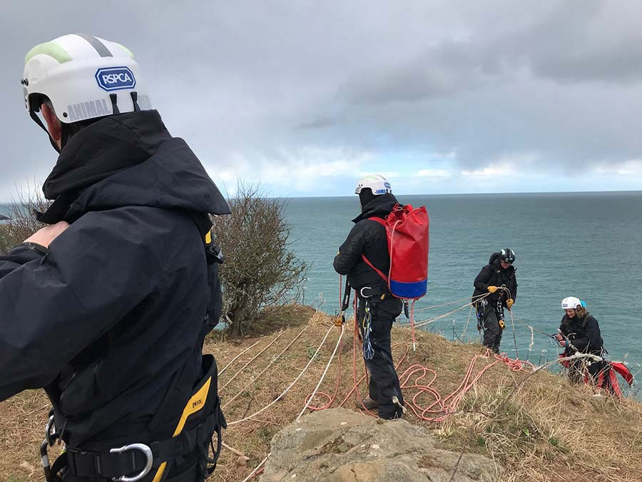 Rescue workers making chain to rescue sheep