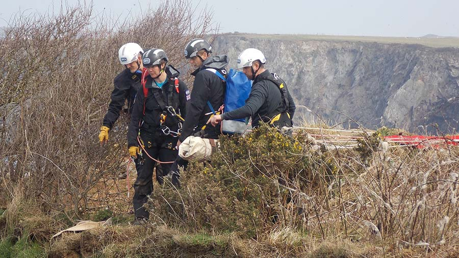 Rescue workers carrying sheep
