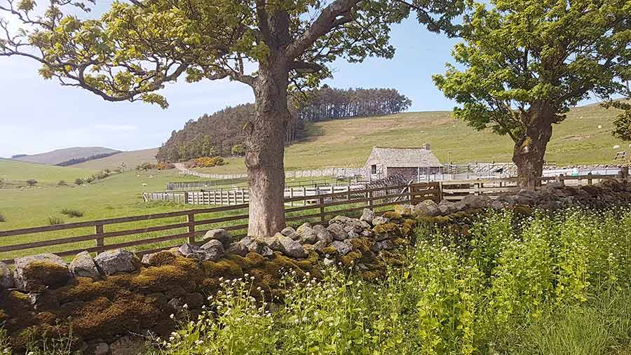 Hethpool Farm © Brockthorpe Consultancy